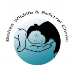 Belize Wildlife & Referral Clinic